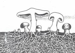 Размножение грибов, каким образом распространяются грибы