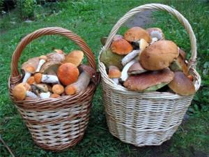 Корисна інформація про гриби. Все що потрібно знати початківцю грибнику