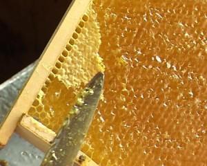 поради бувалих пасічників, поради досвідченого бджоляра початківцям