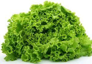 Салат латук, користь і шкода. Лікувальний властивості салату, від чого допомагає. Поради народної медицини. Фото і опис.