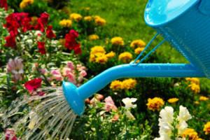 Догляд за клумбою і квітами в липні.