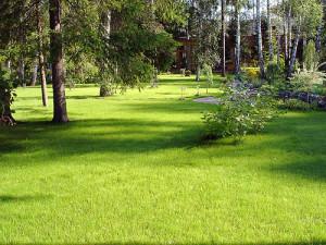 Уход за газоном, вечнозеленый газон, фото!