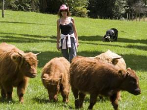 Порода мини коров хайленд, фото, описание, характеристика для разведения в Украине, России.