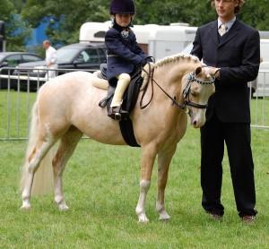 Фото, описание Уэльской породы пони, характеристика для домашнего разведения.