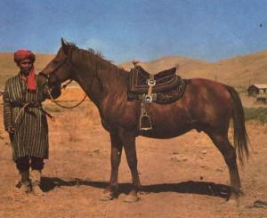 Фото, описание лошади породы Карабаирская, характеристика, разведение.
