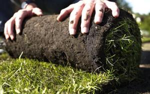 Укладка дерна на газон, описание и фото.