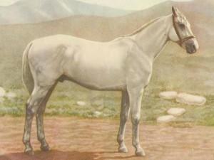 Фото, описание лошадей породы Иомудская, характеристика для домашнего разведения и содержания.