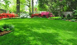 Способы посева газонной травы, уход, технология и фото.