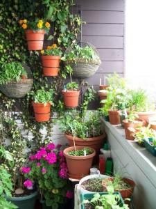 Растения в балконных ящиках, фото.