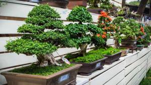 Условия световых режимов для выращивания бонсай, технологии света, описание и фото.