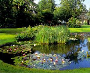 Сад на болоте, описание и фото.