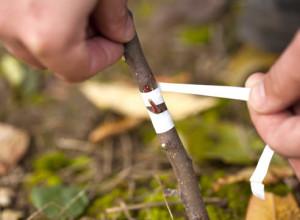 Способи щеплення дерев, строки щеплення, опис і фото.