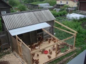 Куры несушки на даче, домашнее содержание кур несушек, содержание и кормление кур несушек на даче, кормление куриц несушек в домашних условиях.