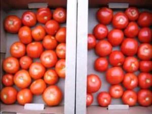 Як правильно зберігати помідори (томати). Температура зберігання томатів. Як краще і де зберігати довго помідори вдома або в холодильнику.