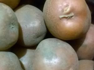 Зберігання картоплі взимку в домашніх умовах у погребі - як правильно?