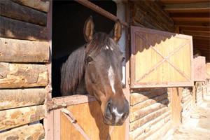 Як правильно утримувати коня в домашніх умовах. Умови для стайні, конструкція і фото.