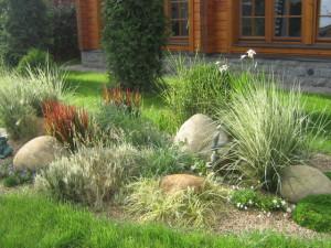 Використання декоративних злаків і трав в ландшафтному дизайні саду, фото.
