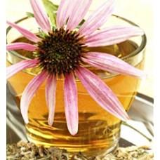 Квітка ехінацея лікувальні властивості. Від чого лікує ехінацея пурпурова. Протипоказання від прийому ехінацеї пурпурової.