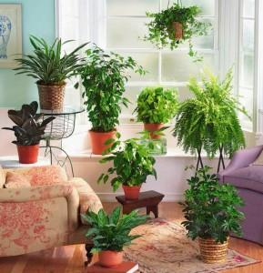 Правила ухода за комнатными растениями, фото, описание.