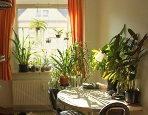 Ідеальний день для купівлі кімнатних рослин, квітів, вазонів в будинок. Місячний календар і порадник.