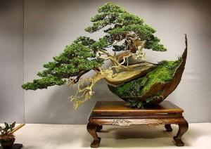 Маленькое дерево в домашних условиях - Бонсай, фото, история.