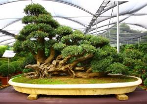 Шикарное фото маленького дерева в помещении.