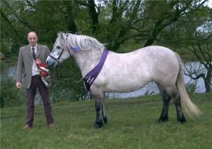Фото, описание лошади Хайленд или Шотландский горный пони, характеристика для домашнего разведения.