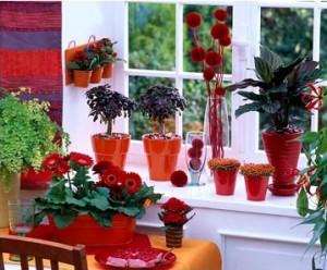 Дизайн растений в домашней обстановке.