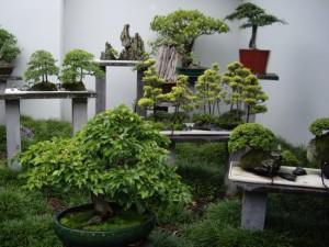 Создание условий для выращивания бонсай, описание и фото.
