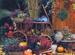 Уход и посадка в саду осенью, фото.