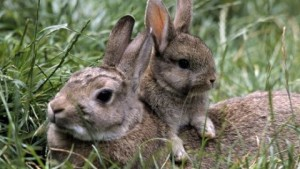 Screening and selection of rabbits, tips, descriptions and photos