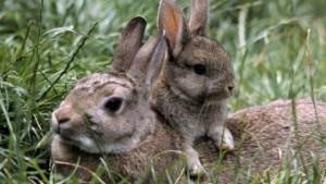 Отбор и подбор кроликов, советы, описание и фото.