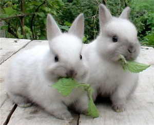 Preparation of feed for rabbits, tips on preparation, description and a photo