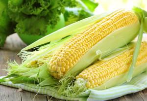 Підготовка і обробка грунту для посіву кукурудзи, опис і фото.