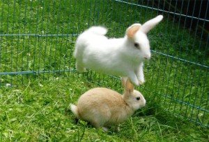 Methods rabbits content, the content of tips, description and a photo