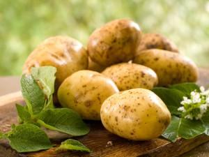 Поради по догляду за картоплею у відкритому грунті, полив, підживлення, опис і фото.